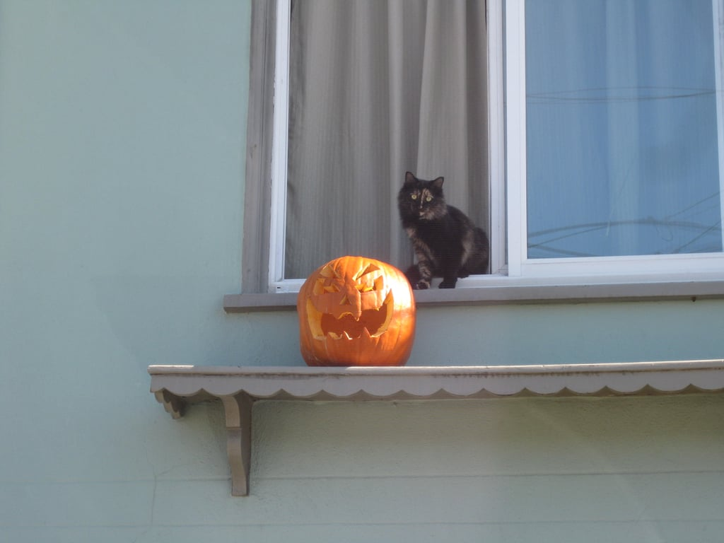 The exception to the cats-loving-pumpkins rule? When the latter usurp's the former's perch. Source: Flickr user coolmikeol