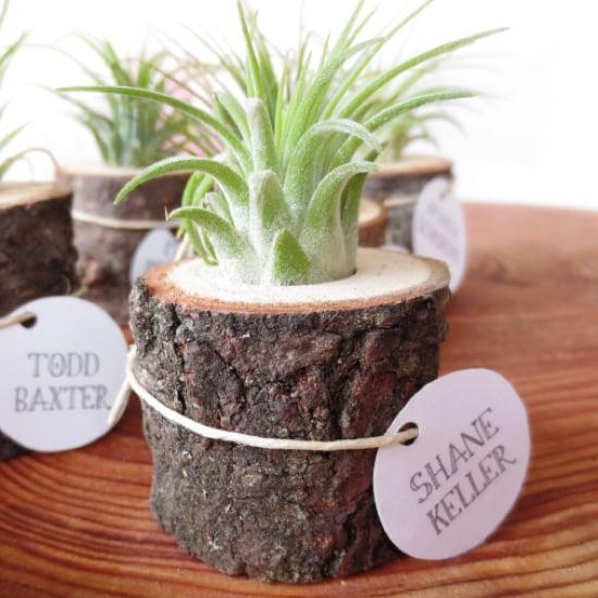 Cute Office Plants