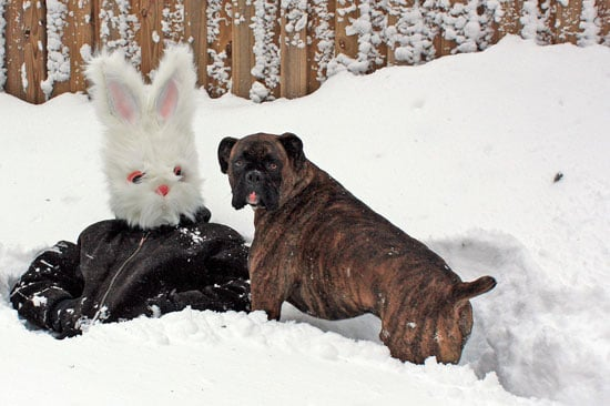 Pictures of a Dog and a Bunny Snowman