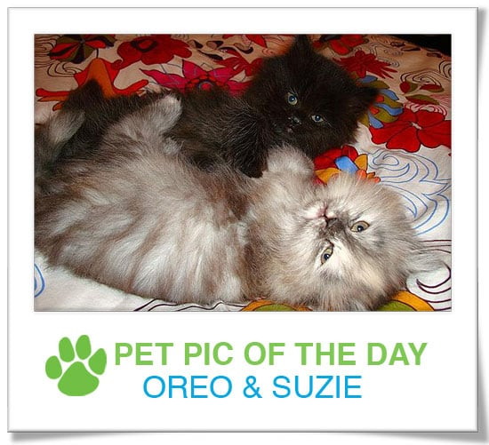 Pet Pics on PetSugar 2009-03-18 09:30:50