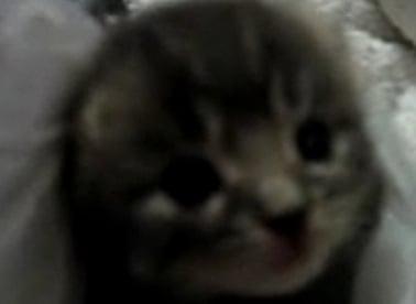 Sneezing Kitty