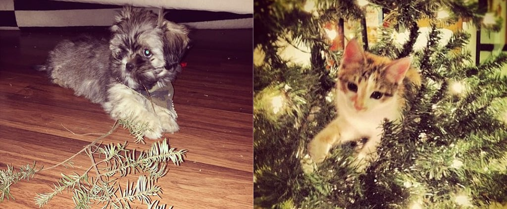 16 Pets Ruining Their Owners' Christmas Decorations