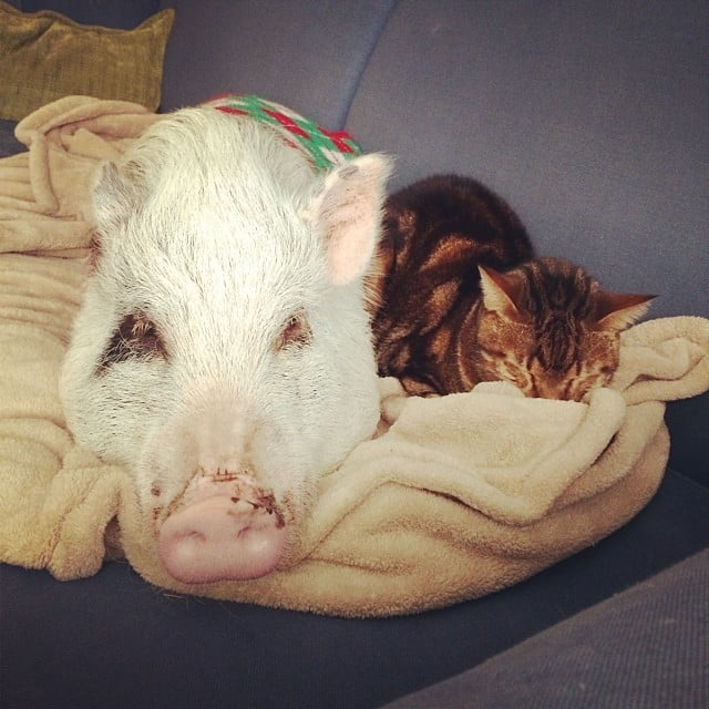 Sharing a Blanket