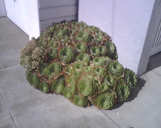 Name This Type of Plant