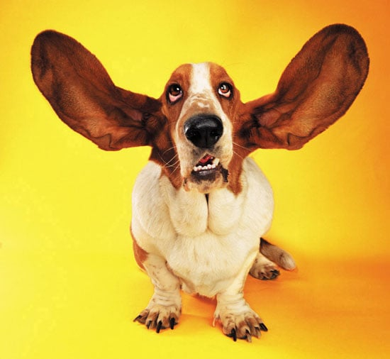 Dirty Ears