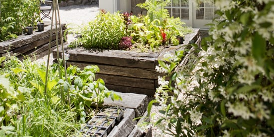 5 Landscaping Mistakes That Could Cost You Dearly