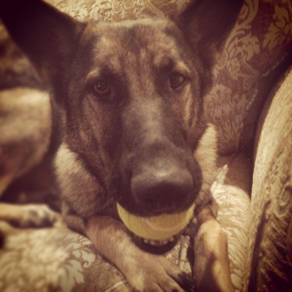 Editorial Assistant Emily Bibb's other dog, a German Shepherd named Bella, was snapped during a game of fetch.