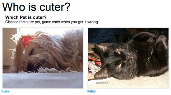 Play Our Which Pet Is Cuter? Game!