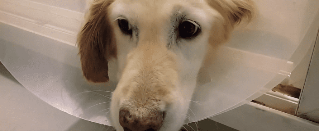 Despite Having No Paws, This Fearless Rescue Dog Is as Happy as Can Be