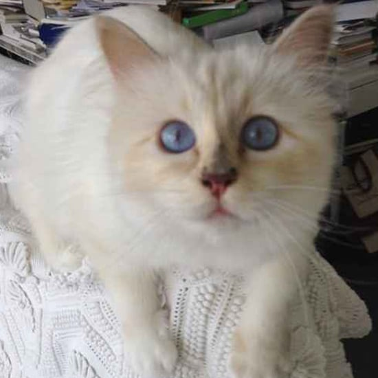 C Is For Choupette