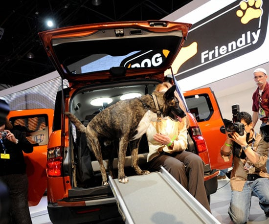 Honda Element Goes to the Dogs!