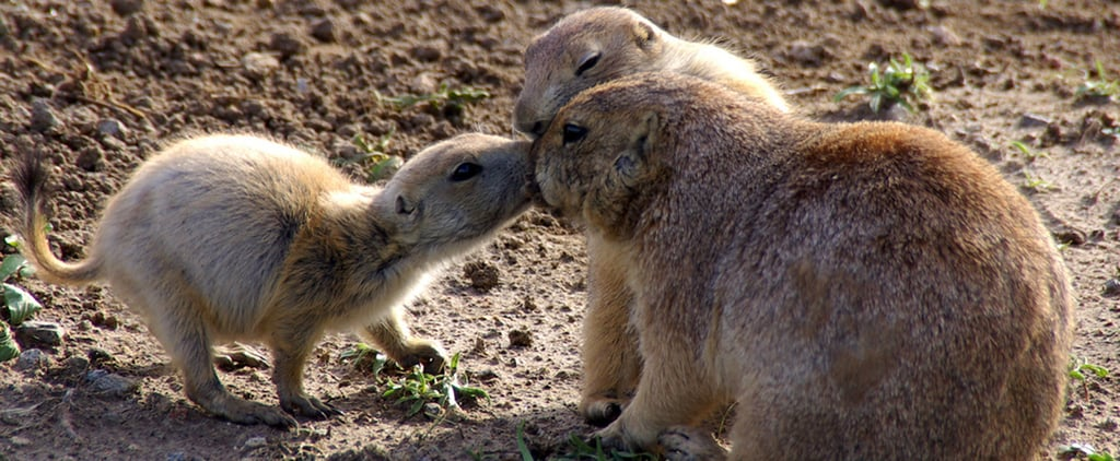 Pucker Up: Cute Pictures of Animals Kissing