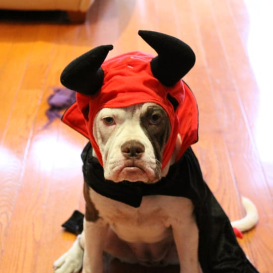 Cute Animals in Halloween Costumes