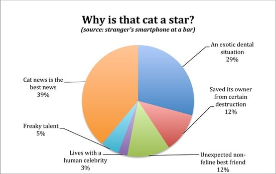 Stats & Cats: Lifestyles of the Rich and Famous Felines