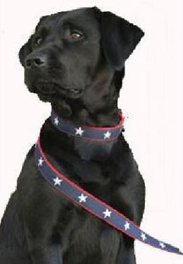 Stars and Stripes . . . For Fido.