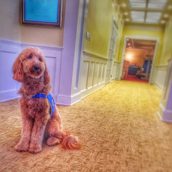 Comfort Dog at Funeral Home | Video