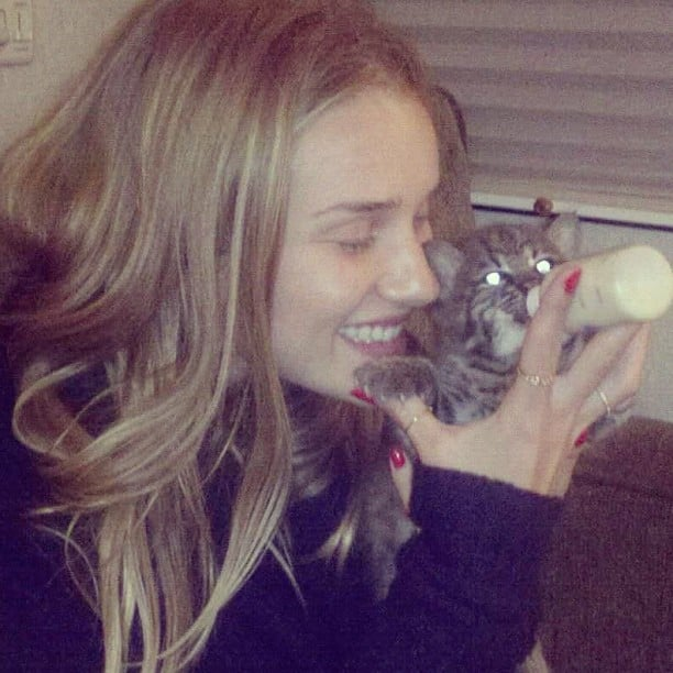 Rosie Huntington-Whiteley spent time with a baby bobcat. Source: Instagram user rosiehw