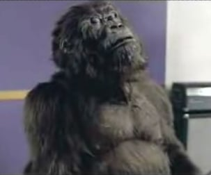 Gorilla Takes A Moment To Reflect
