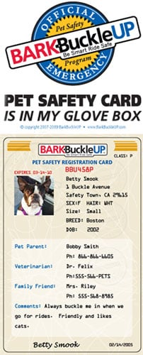 Get the Bark Buckle Up Safety Kit for Your Dog Before Your Next Road Trip