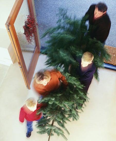 Ten Tips 'Til The Holiday: Choosing a Tree