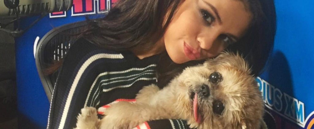 Marnie the Dog Is About to Become Your New Favorite Celebrity Pet