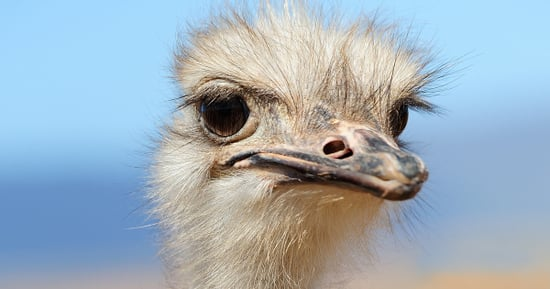 Ostrich Goes Full 'Road Runner' To Chase Down Cyclists