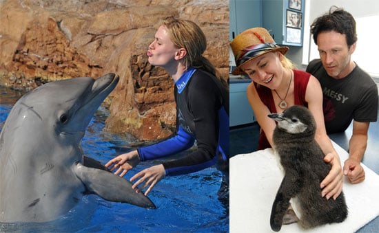 Photos of Anna Paquin and Stephen Moyer at Sea World in San Diego