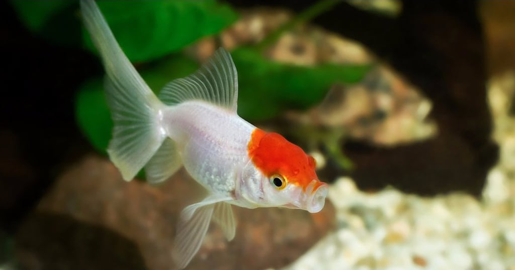 7 Reasons You Might Really Need a Fish