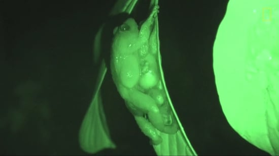 Scientists Discover a New Way Frogs Get Freaky