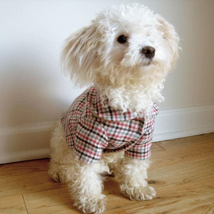 Aggie Gingham Dog Coat, $40
