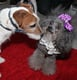 Uggie cozies up to a canine admirer. Source: Getty