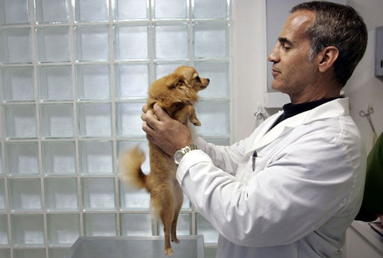 Does Your Pet Love the Vet?