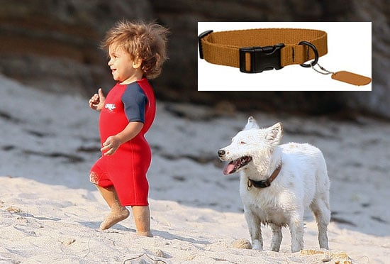 Found! Matthew McConaughey's Dog Collar For BJ