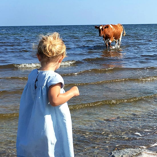 Who Is the 'Unexpected' Visitor Here: the Cow - or the Princess?