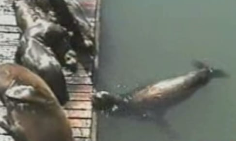 Sea Lion Gets Revenge!