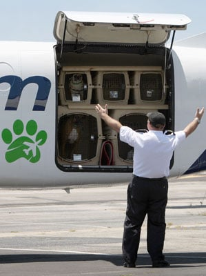 "The Scoop: Pet Airways Launches Thanksgiving Day ""Flight to Freedom"" For Adoptable Pets"