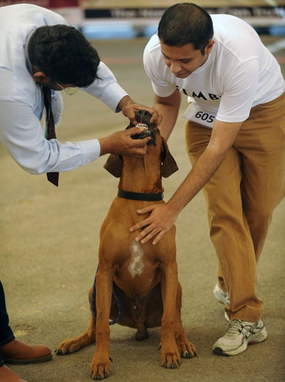 Dog Show Picture