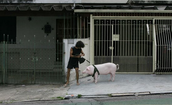 Globetrotters: This Little Piggy Went to Market