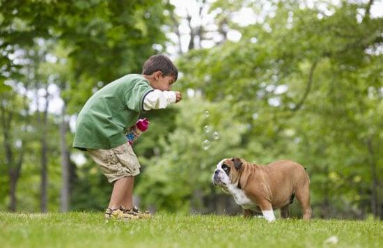PetSugar's Weekly Recap Quiz 2009-06-13 03:00:26