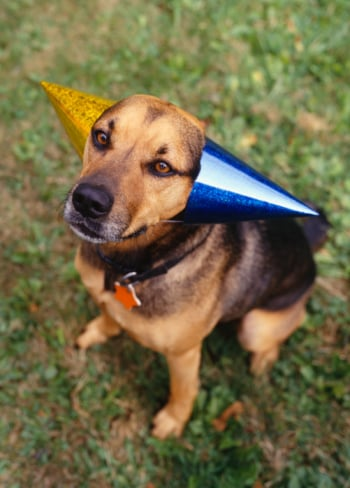 Come Paw-ty With Me: Dog Birthday - The Look & Music