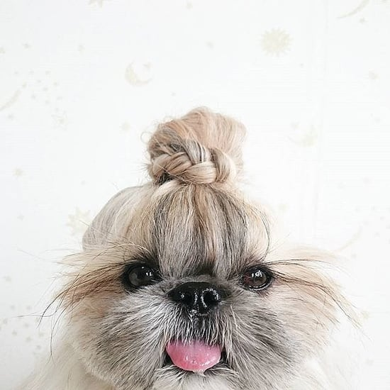 Meet the 55 Most Stylish Pets on the Internet