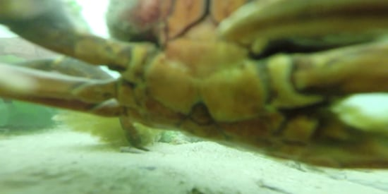 Crab Finds Lost GoPro, Takes Awesome Underwater Selfie