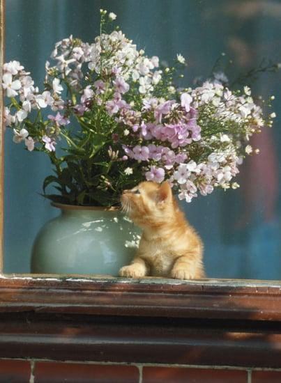 Pet Peeves: Kitty Eats My Plants!