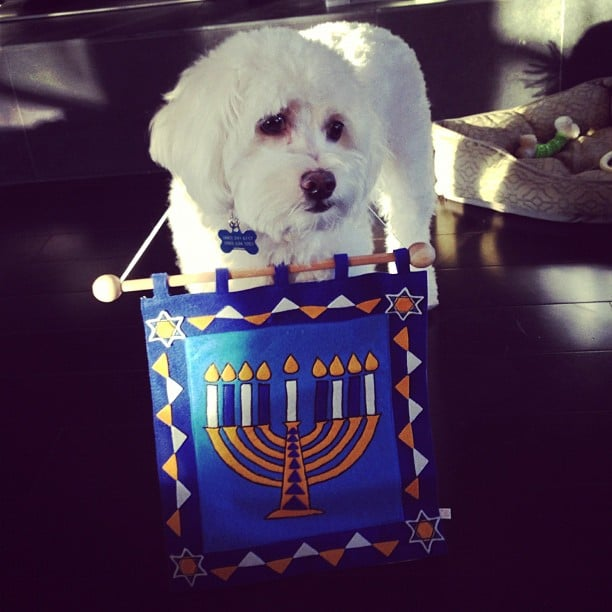 Let's Light the Menorah!