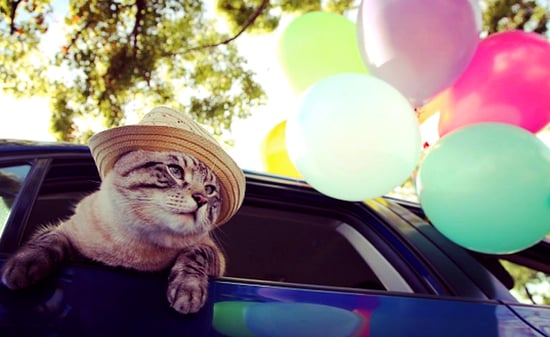 Poonchic the Cat Dresses Up and Cruises Hollywood in Cars