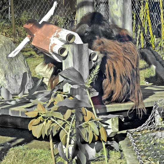 Your Guess Is as Good as an Orangutan?