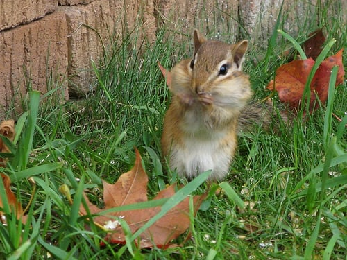 Garden Therapy: Preventing Creatures From Eating Fall Bulbs