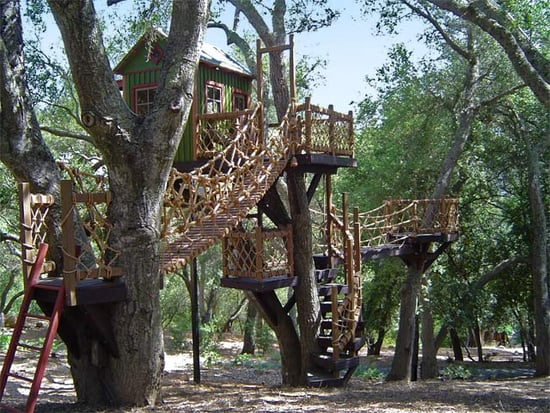 Toy Box: At Home in the Trees