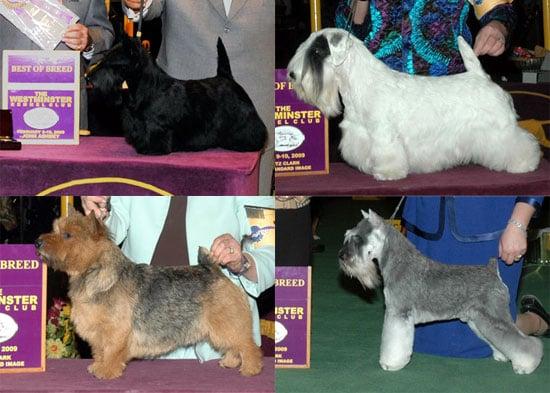 2009 Westminster Winners: Terrier Group