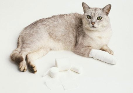 Stocking a First Aid Kit for Pets